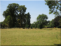 TQ0481 : Bucolic scene in Huntsmoor Park by Mike Quinn
