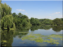 TQ0481 : Little Britain Lake north of Packet Boat Lane by Mike Quinn