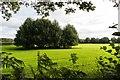 SJ8063 : Moorhead Farm by Peter McDermott