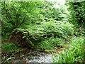 NZ6721 : Rootplate of a fallen tree, Saltburn Gill by Christine Johnstone