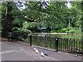 SK5640 : A tram passing The Arboretum by John Sutton