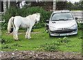 S4155 : Horse and Car by kevin higgins
