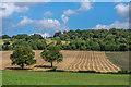 TQ0448 : Farmland near Albury Downs by Ian Capper