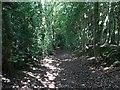 SK3710 : Hollow Lane by Ludlam Wood by Ian Calderwood