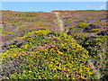 SW7353 : Coastal Heathland near Cligga Head by Tony Atkin