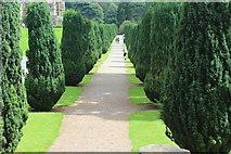 ST5071 : Broad Walk, pleasure grounds, Tyntesfield by M J Roscoe