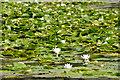 SR9794 : Bosherston Lily Ponds by Stephen McKay
