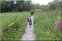 ST4286 : Boardwalk, Magor Marsh Nature Reserve by M J Roscoe