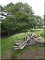 ST7475 : Carved rattlesnake on tree trunk, Dyrham Park by David Smith
