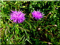 H2678 : Wild plants -1 , Aghakinmart by Kenneth  Allen