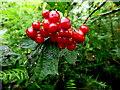 H2678 : Wild plants -3 , Aghakinmart by Kenneth  Allen