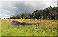 NH9057 : Saltmarsh Culbin Sands Nature Reserve by valenta