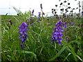 H2578 : Wild plants, Ardbarren Lower by Kenneth  Allen