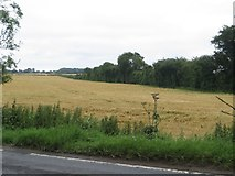 TA1345 : Arable field east of Catwick by Graham Robson