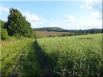 TQ5365 : Field alongside the railway line by Marathon