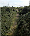 SM9207 : Single-track railway line south of Neyland Road, Steynton, Milford Haven by Jaggery