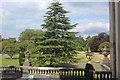 ST0972 : Conifer on oval lawn, on north side of Dyffryn House by M J Roscoe