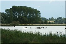 SK8707 : View of ducks and cormorants on the lake from Rutland Water Nature Reserve by Robert Lamb