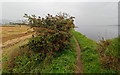 NH5558 : Path beside the upper reaches of the Cromarty Firth by valenta
