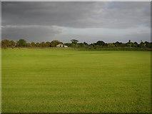 TL4259 : Storey's Field Cricket Pitch by Hugh Venables