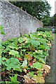 SN4860 : Rhubarb, rhubarb, rhubarb by Richard Hoare