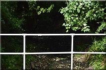 TL5136 : River Cam by N Chadwick