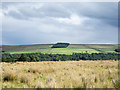 NZ0541 : Moorland with rushes above Tunstall Reservoir by Trevor Littlewood