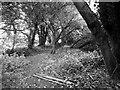 SP1665 : Path near Whitley Farm by Derek Harper
