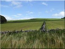 SK1462 : Disused pits north of Hartington Moor Farm by David Smith