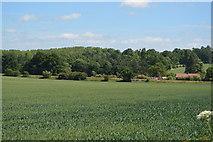 TL5134 : Wheat field by N Chadwick