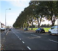 ST1775 : Tree-lined side of Virgil Street, Cardiff by Jaggery