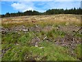 NS4575 : Cleared forestry land by Lairich Rig