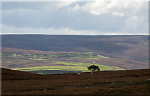 SE0699 : Heather moorland with lone tree by Trevor Littlewood