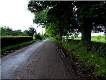 H6056 : Feddan Road by Kenneth  Allen