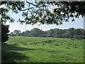 SJ7244 : Countryside at Bridgemere by David Weston