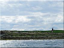 NU2235 : East Wideopen by John Allan