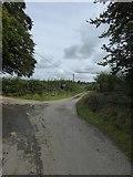 SX5597 : Road to Folly Gate by David Smith