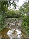 SX5597 : Track into woodland north of Eastington Farm by David Smith