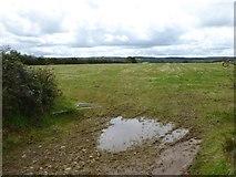 SX5497 : Field near Waytown by David Smith