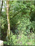 SX5599 : Medland Brook at Millbrook by David Smith