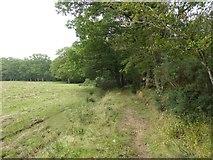 SS5401 : Bridleway north of Medland by David Smith