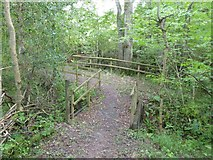 SS5402 : Footbridges in the woods south of Essworthy by David Smith