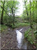 SS5402 : Stream that is a tributary of the Lew in woods south of Essworthy by David Smith