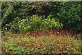 TF7602 : Gooderstone Water Garden by Julian Osley