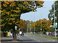 SK5808 : Autumn colours along the A6 Loughborough Road by Mat Fascione