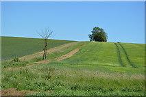 TL5335 : Rolling Farmland by N Chadwick
