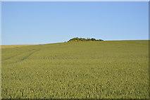 TL5336 : Hunterswell Plantation by N Chadwick