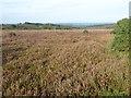 TQ4731 : Heathland on Ashdown Forest by Marathon