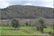 SX4663 : River Tavy and Blaxton Wood by N Chadwick