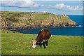 SW7011 : Clifftop grazing by Ian Capper